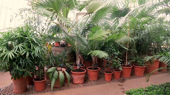 tropical plants in terra cotta pots