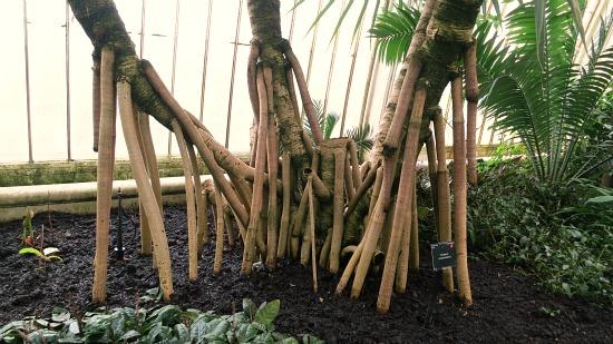 Kew Royal Botanical Gardens – Inside the Palm House {Greenhouse}