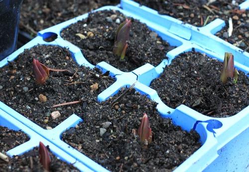 Mavis Garden Blog – Setting Up The Greenhouse