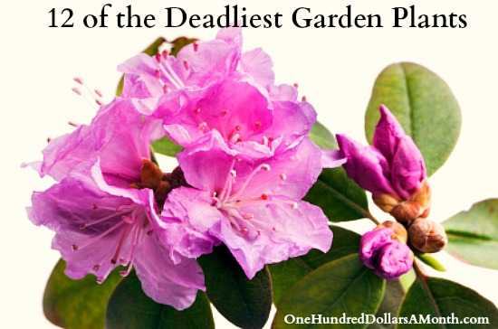 12 of the Deadliest Garden Plants
