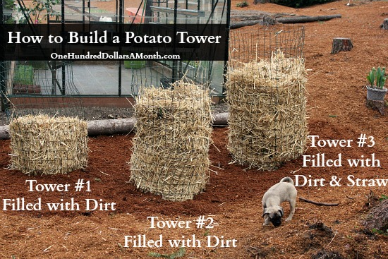 DIY – How to Build a Potato Tower