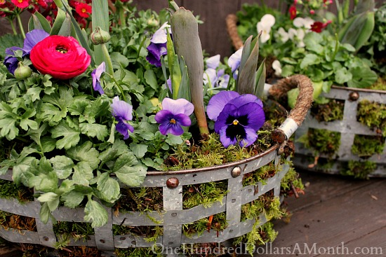 DIY spring flower basket with moss