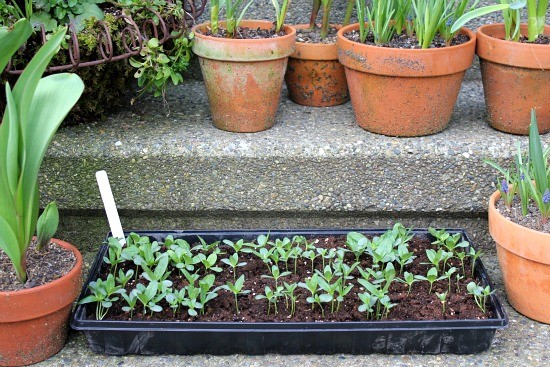 How to Harden Off Seedlings