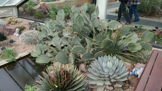 Kew Royal Botanic Gardens  Succulents
