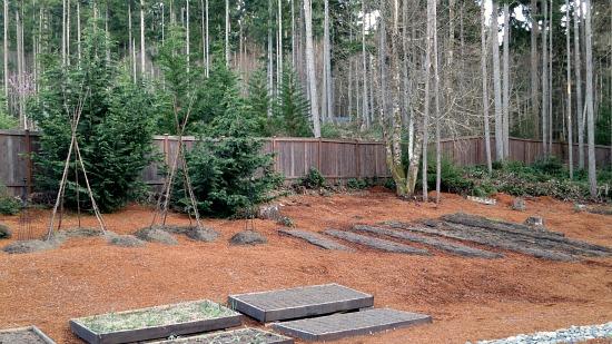 Mavis Butterfield   Backyard Garden Plot Pictures – Week 13 of 52