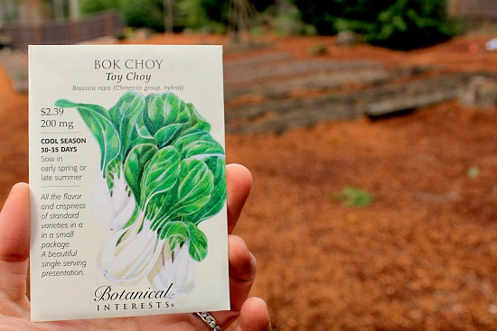 How to Grow Bok Choy {Start to Finish}