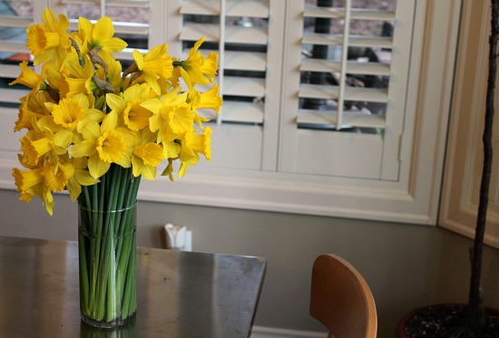 Lucy the Puggle Dog Delivers Daffodils to Francisco
