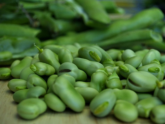 How to Grow Fava Beans {Start to Finish}