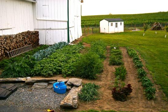 garden with chicken coop