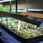 grow lights