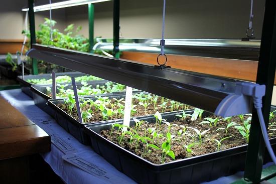 Mavis Garden Blog – Seedling Updates and Pictures