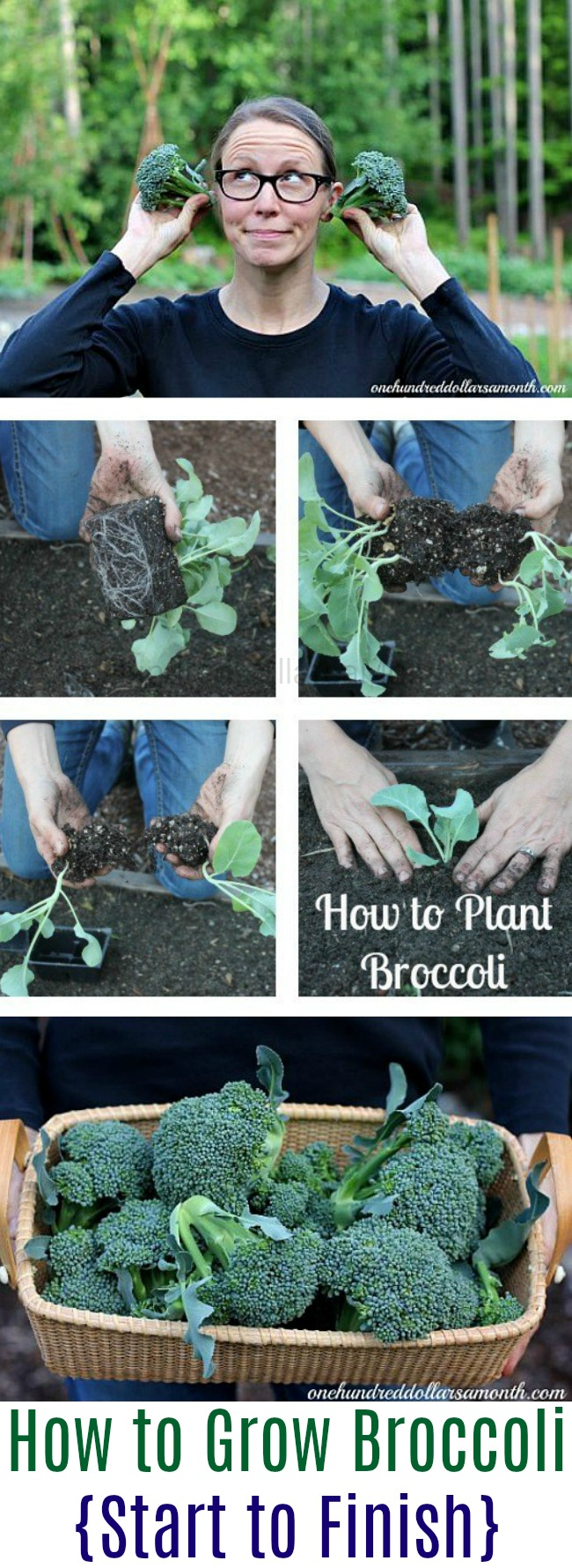 How to Grow Broccoli {Start to Finish}