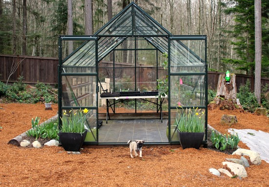 Growing Vegetables in a Greenhouse – End of March