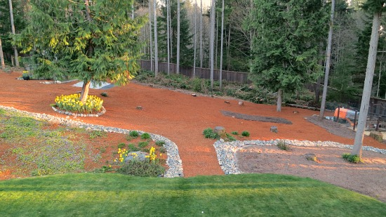 neon red bark wooden backyard garden