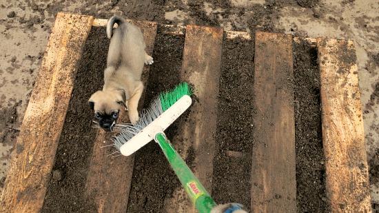 pallet garden DIY