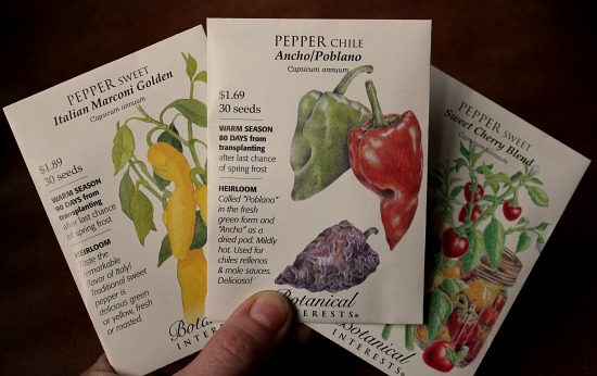 How to Grow Peppers {Start to Finish}