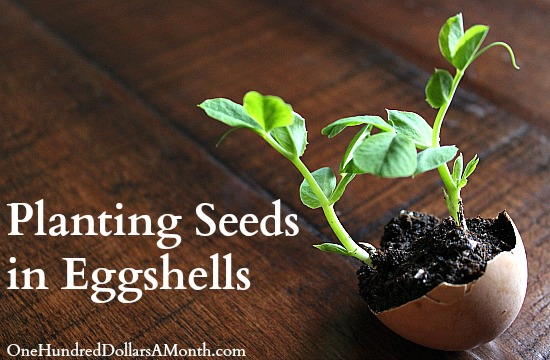 Gardening Projects for Kids – Planting Seeds in Eggshells