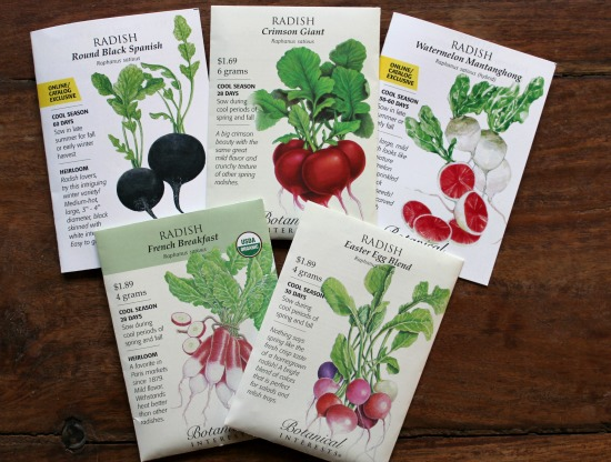 How to Grow Radishes {Start to Finish}