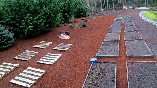 Mavis Butterfield | Backyard Garden Plot Pictures – Week 10 of 52
