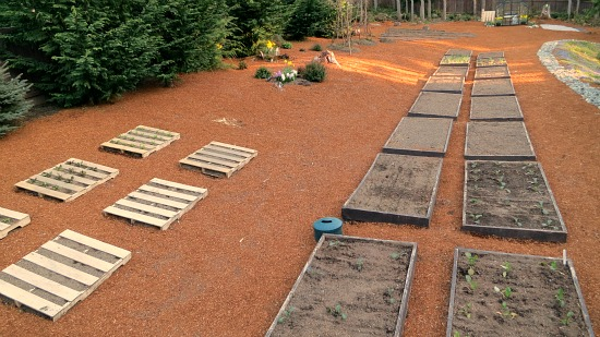 Mavis Butterfield | Backyard Garden Plot Pictures – Week 14 of 52