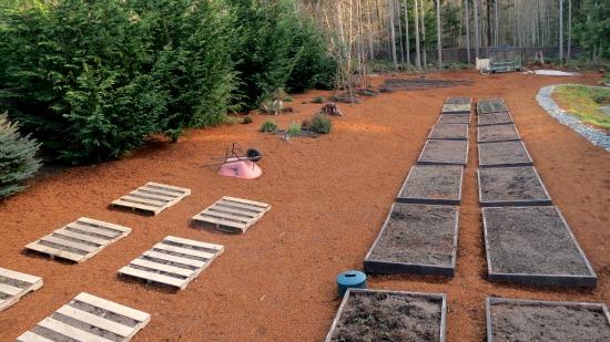Mavis Butterfield | Backyard Garden Plot Pictures – Week 11 of 52