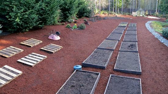 Mavis Butterfield   Backyard Garden Plot Pictures – Week 12 of 52