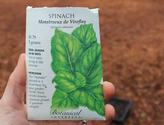 How to Grow Spinach {Start to Finish}