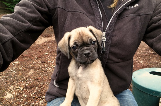 Lucy the Puggle Dog – Training Bells, Dog Treats, Fences, Beds and Bowls