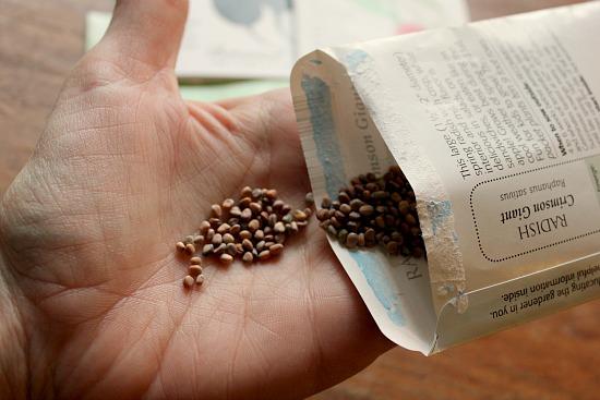 Radish Seeds Growth Radish Seeds Growing What do
