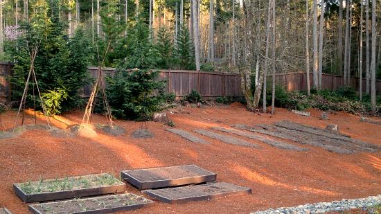 wooden backyard garden bean teepees