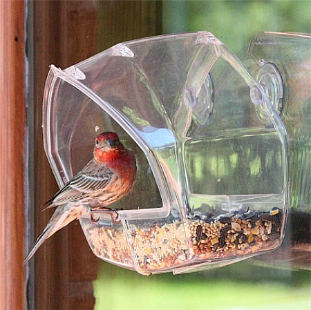 Birdscapes garden feeder