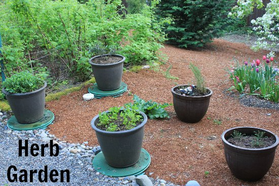 Container herb garden growing basil sage parsley for Container herb garden