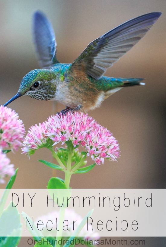 DIY Hummingbird Nectar Recipe