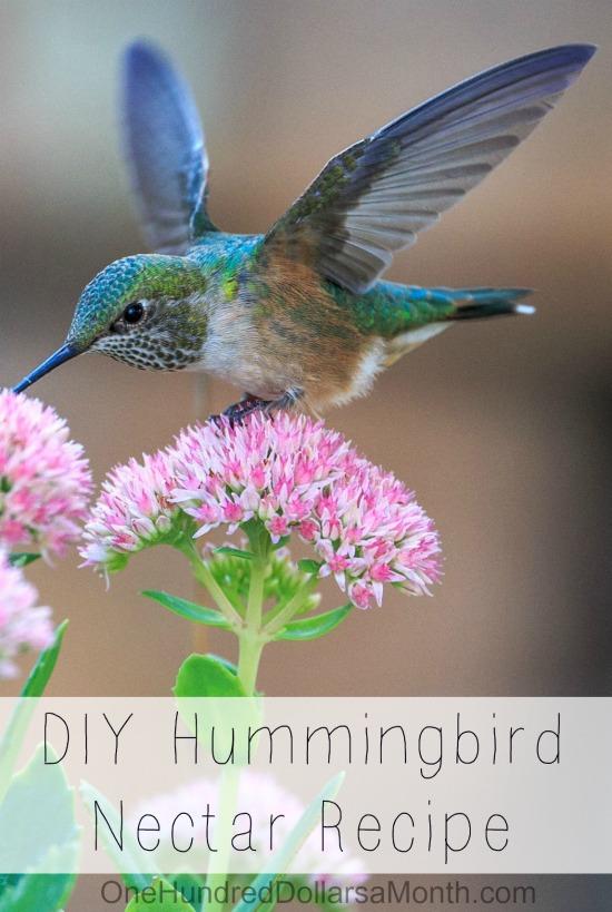 DIY Hummingbird Nectar Recipe