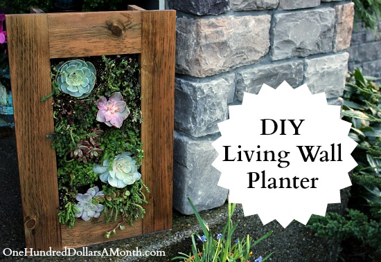DIY Living wall sedum succulent planter