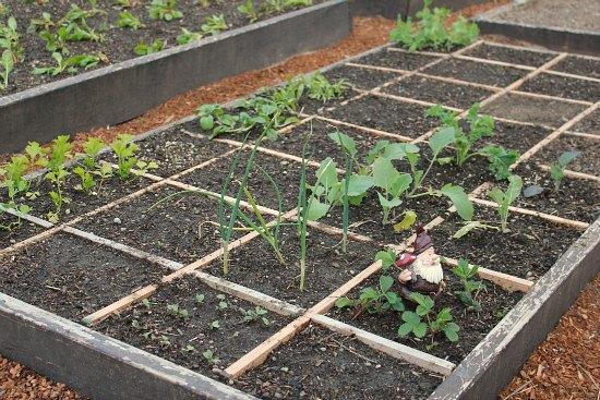 DIY Square Foot Gardening Grid