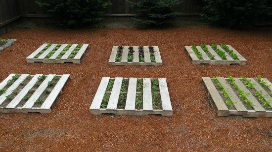 DIY Wood Pallet Garden