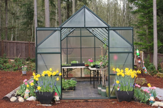 Growing Vegetables in a Greenhouse – Spinach, Lettuce, Basil and More