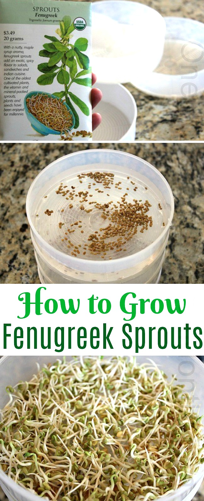 How to Grow Fenugreek Sprouts {Start to Finish}
