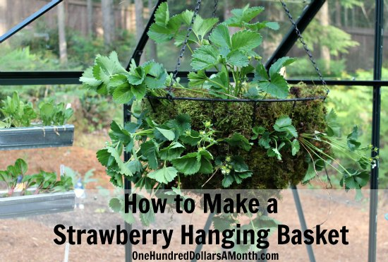 How to Make a Strawberry Hanging Basket