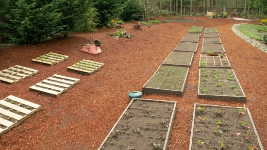 Mavis Butterfield | Backyard Garden Plot Pictures – Week 16 of 52