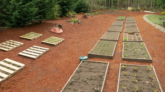Mavis Butterfield   Backyard Garden Plot Pictures – Week 16 of 52