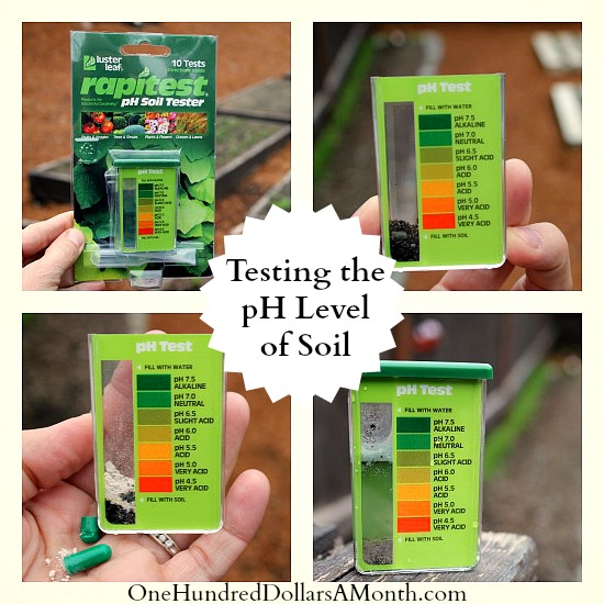 Testing the pH Level of Soil