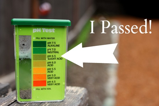 Testing the pH Level of Soil