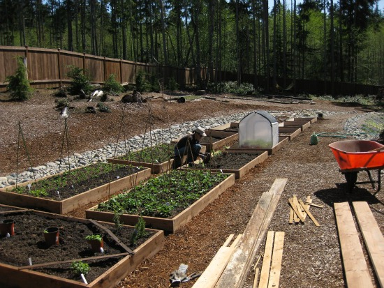 Tomato-plants raised garden beds