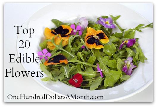 Top 20 Edible Flowers
