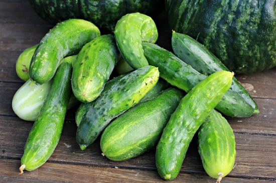 How To Grow Cucumbers Start To Finish One Hundred