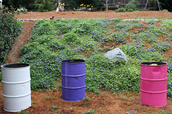container garden steel drums planters