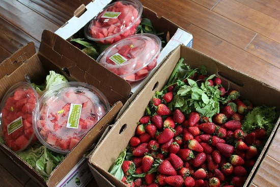 Food Waste in America – What Am I Suppose to Do with All this Watermelon?