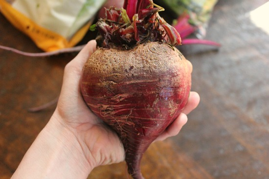 FREE Groceries – Reclaimed Food Show and Tell